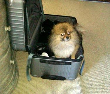 Kody_suitcase